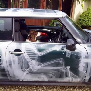 creative-car-owners-88-5807584ba4d6f__700